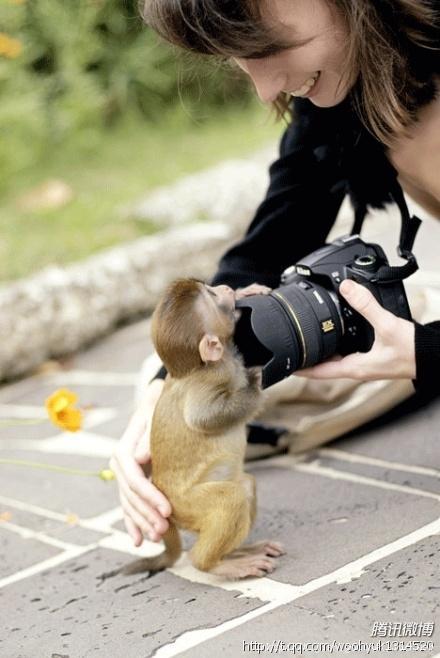 小猴子好可爱啊